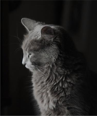 portrait-neb