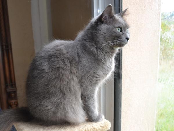 Benice of Silver Blue Goblin