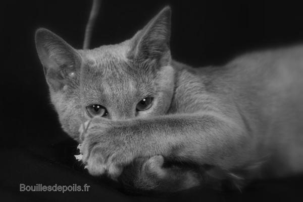 Figaro de la Ferlandière