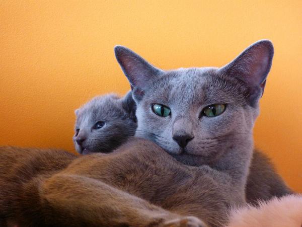 Lolcat's bébés 3.jpg 4