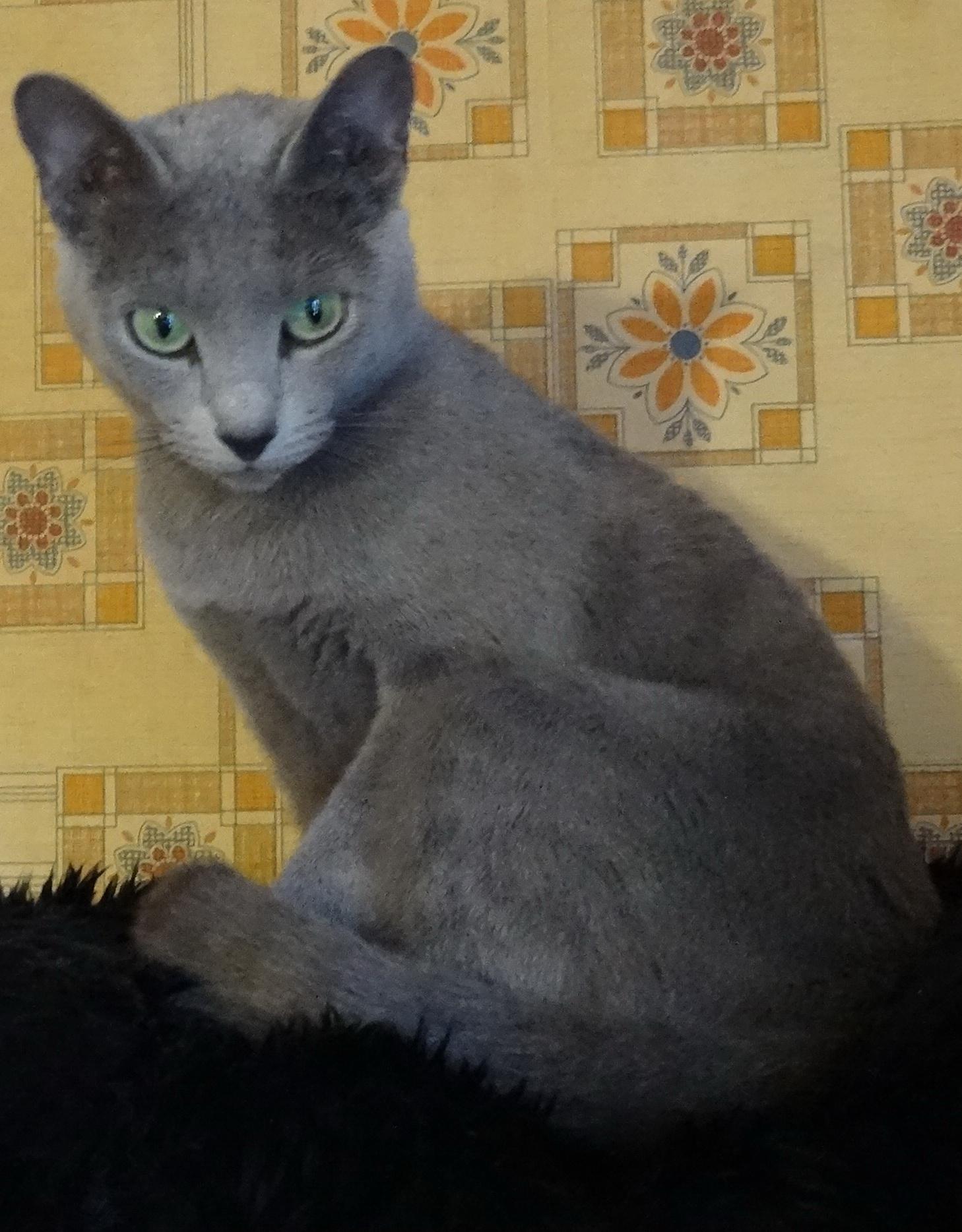 Xena von Nebelungental, femelle