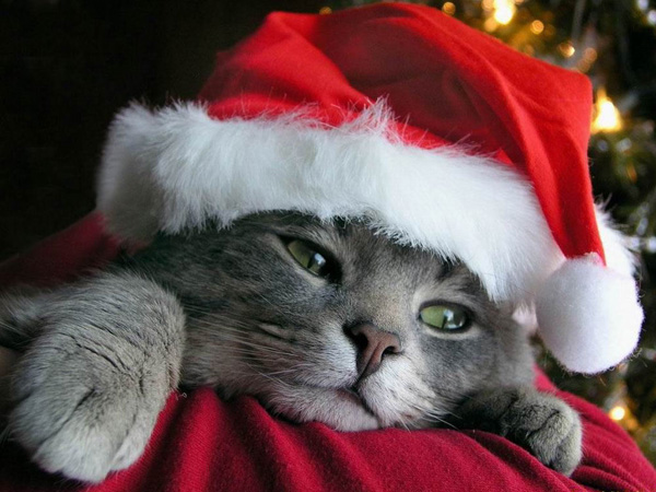 """Résultat de recherche d'images pour """"chat père noël"""""""