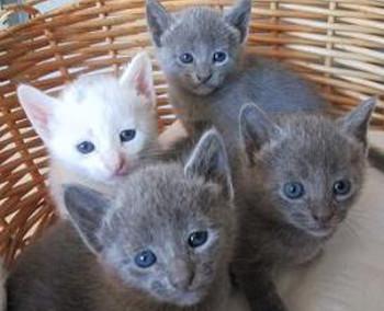 chatons-mixtes