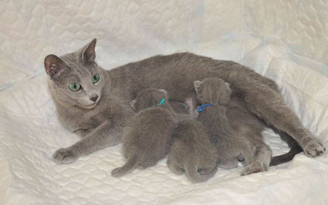 gaellie et ses bébés